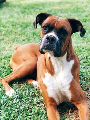 Dog Offences Melbourne